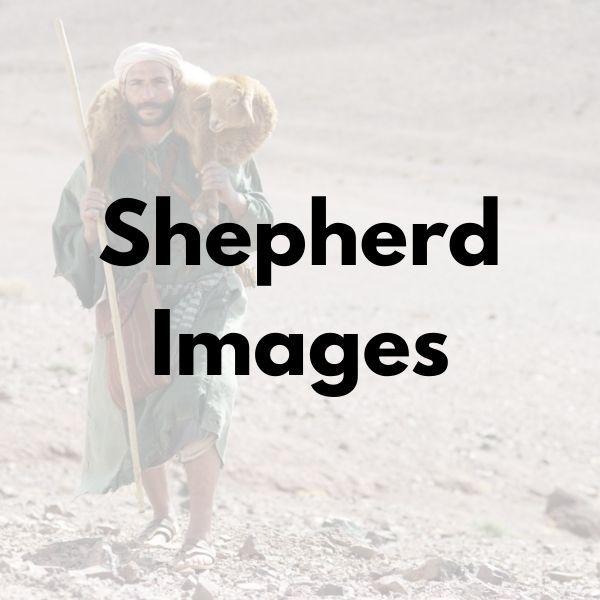 Shepherd Images