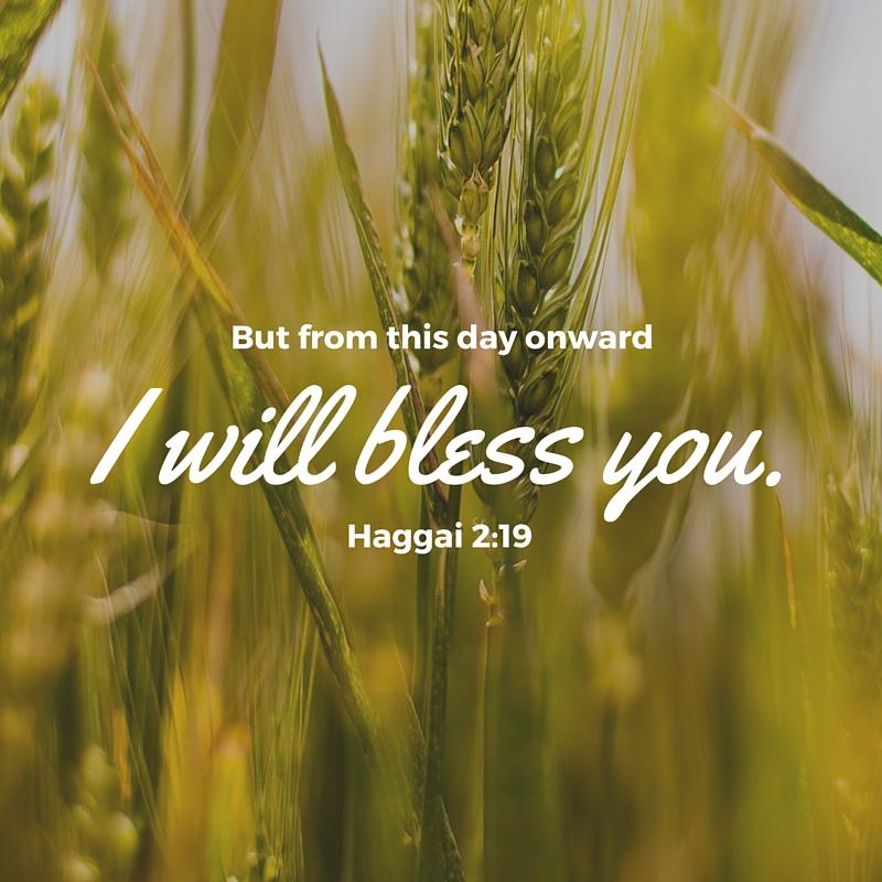 Haggai 2:19