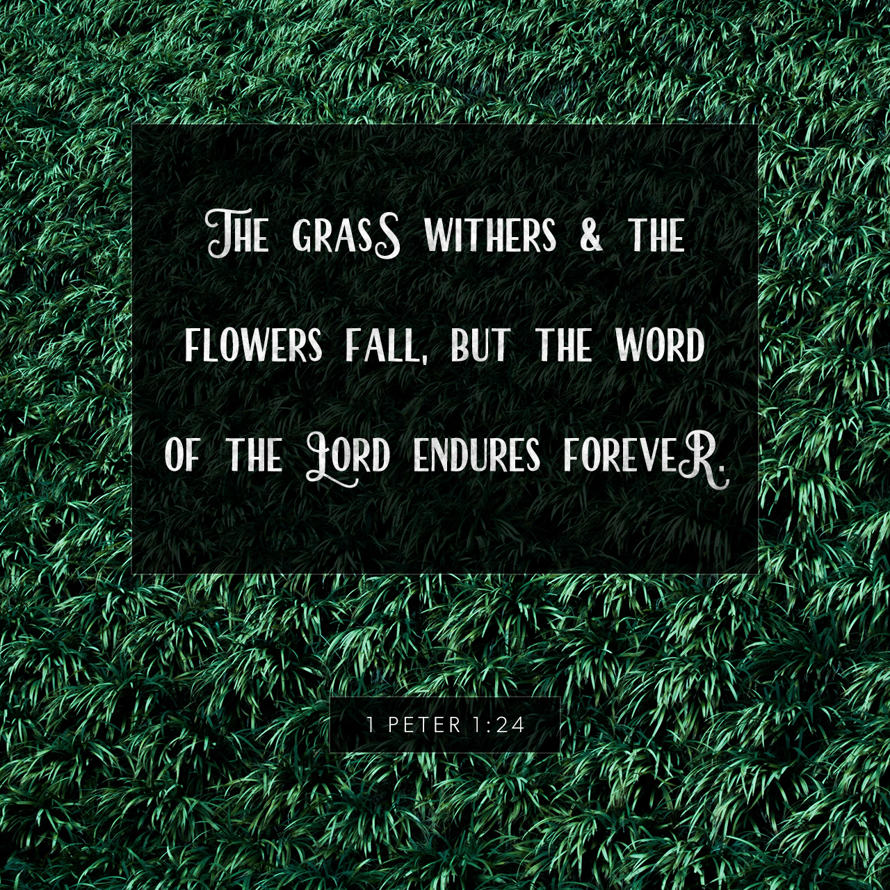 1 Peter 1:24