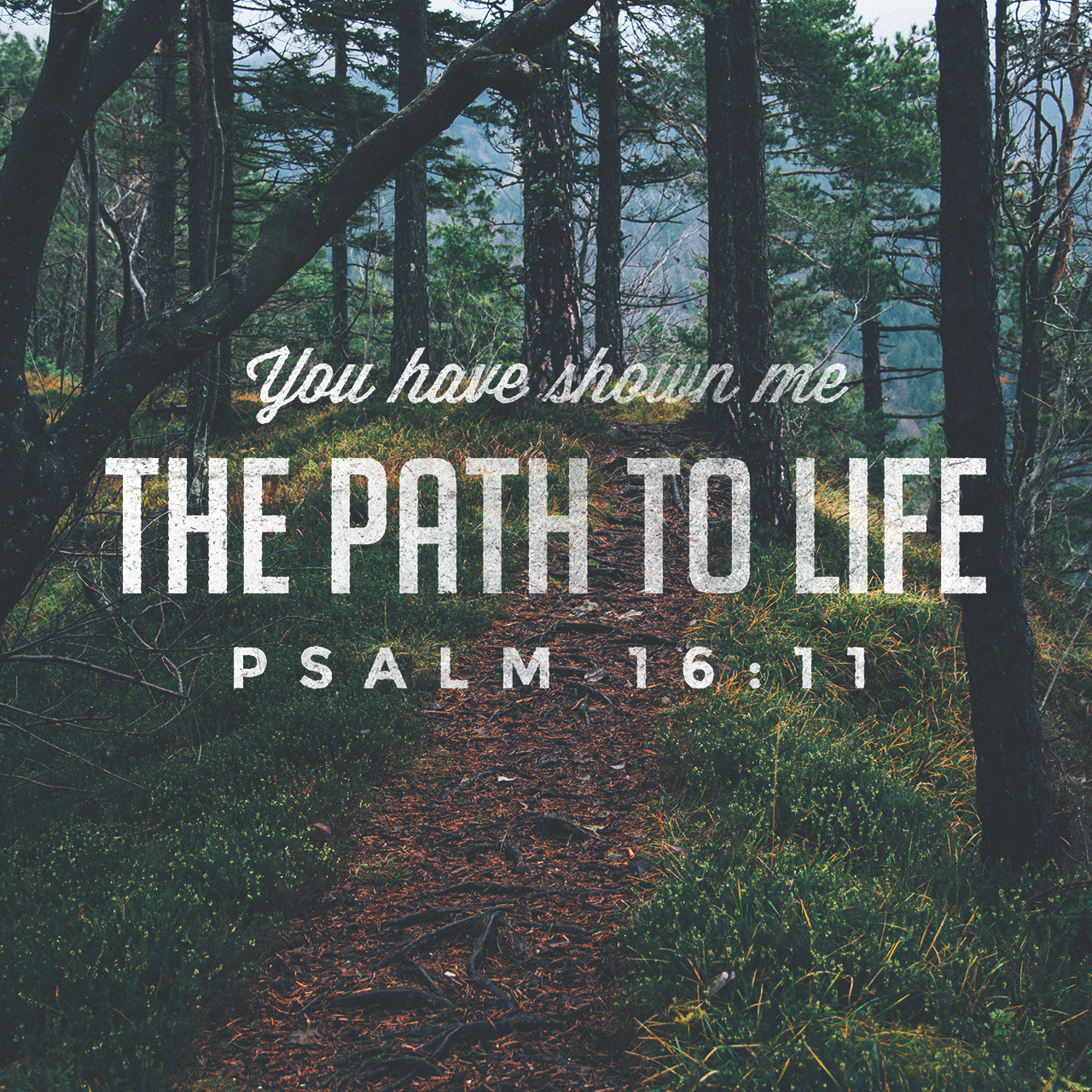 Image result for psalm 16:11