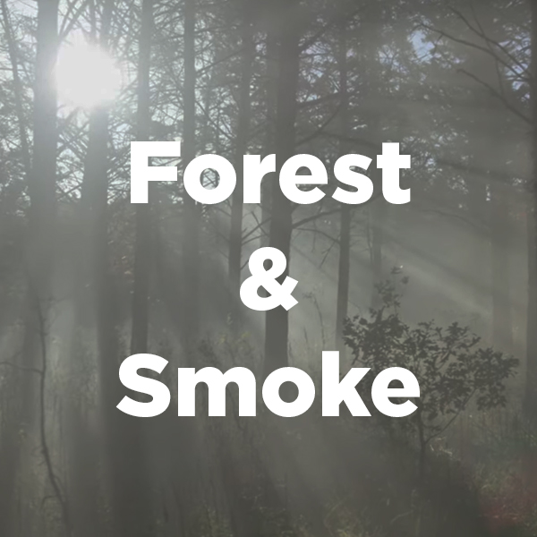 Stock Videography: Forest and Smoke