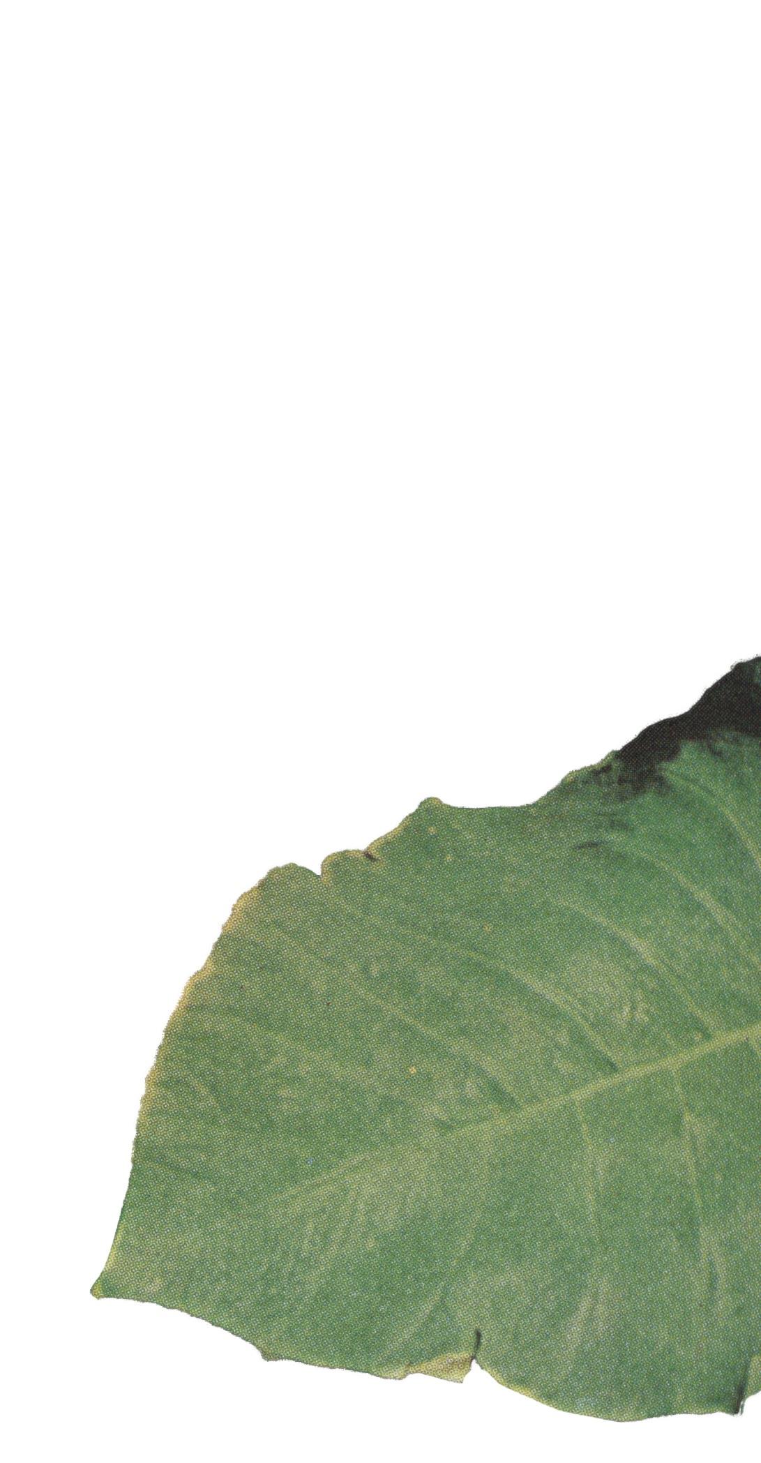 Leaf 6 (PNG)